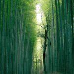 Shindo venitused taastavad keha heaolu