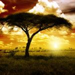 Sportlike elamuste jahil Lõuna-Aafrika Vabariigis