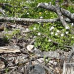 5 sammu õnnestunud kevadmatka planeerimiseks